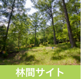 立原高原キャンプ場・施設紹介:林間サイト